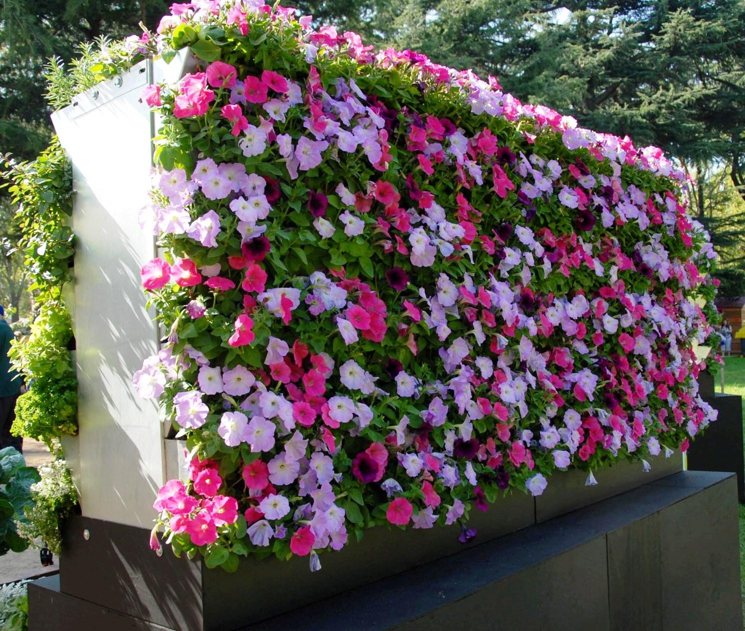 jardim vertical absolut:Gradini verticale – Amenajari interioare – Poze si idei design