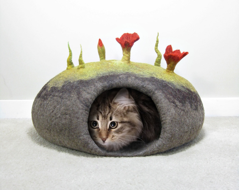 cotet pisici